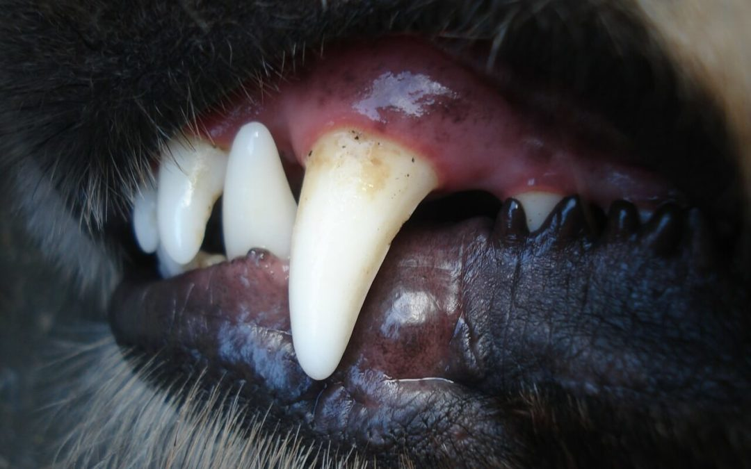 Keeping your pets' teeth clean
