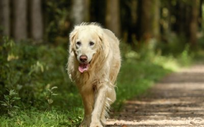 Arthritis management in pets